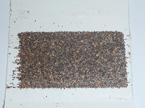 schlupfwespen gegen lebensmittelmotten einzelk rtchen x 3 lieferungen aimnexa. Black Bedroom Furniture Sets. Home Design Ideas