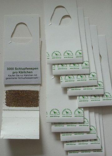 schlupfwespen gegen lebensmittelmotten 3 lieferungen mit je 8 k rtchen doppelpack aimnexa. Black Bedroom Furniture Sets. Home Design Ideas