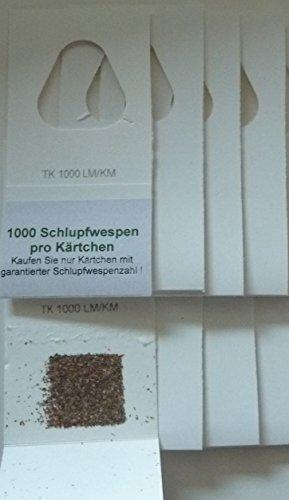 schlupfwespen gegen lebensmittelmotten 10 st ck 1000 er k rtchen 3 lieferungen aimnexa. Black Bedroom Furniture Sets. Home Design Ideas